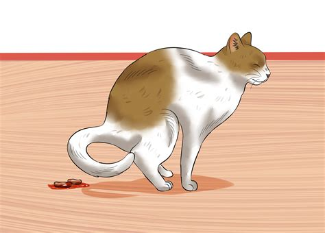 what to give a constipated how to give a cat an at home 11 steps with pictures
