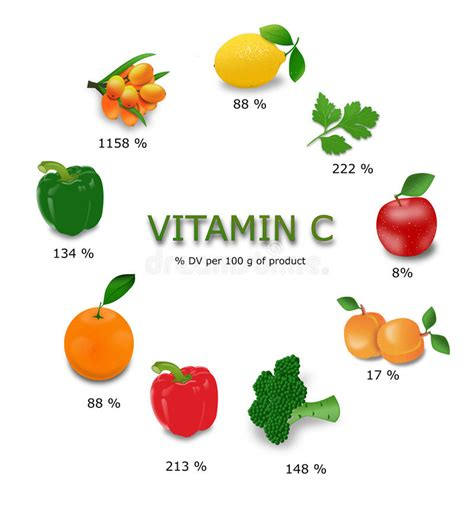 Vitamin Fruit 18 Dewasa Vitamin C Sources Stock Illustration Illustration Of