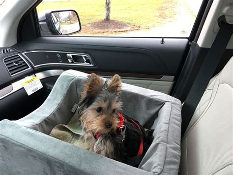 yorkie car seat how to choose a yorkie puppy 14 steps with pictures