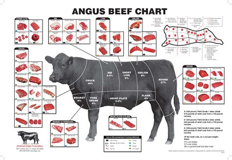 beef diagram t bone steaks