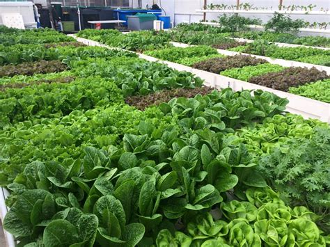 Build Your Home Online by What Is Aquaponics