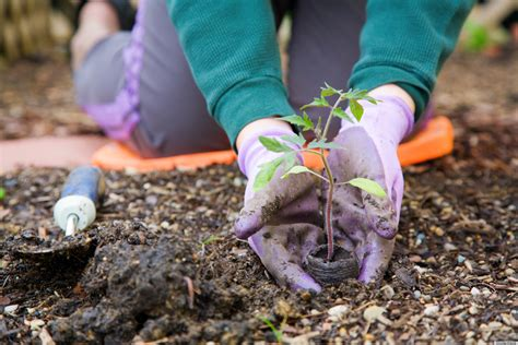 Overcoming Seasonal Affective Disorder With Gardening