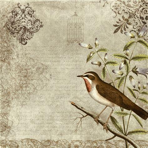 bird wallpaper for walls vintage birds free wallpaper photos vintage bird wallpaper