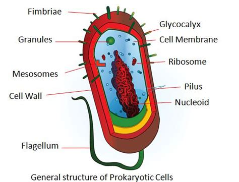 definition generic structure of biography difference between prokaryotic cells and eukaryotic cells