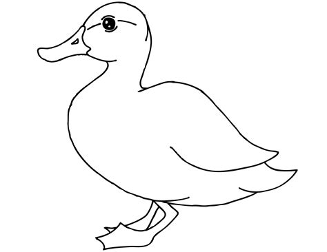 printable duck coloring pages  kids animal place