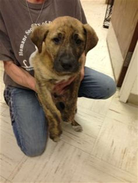 found dogs near me 1000 images about found dogs wv on west virginia lab and bible