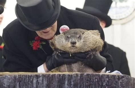how to groundhog day six more weeks of winter punxsutawney phil sees his