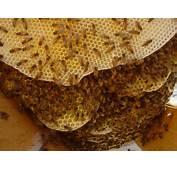 Honey Bee Hives For Sale In Ohio  Auto Design Tech