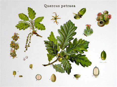 how oak barrels affect the taste of wine wine folly wine tips tricks page 9 of 32 wine folly