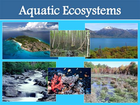 section 4 4 aquatic ecosystems aquatic ecosystem reference at search com