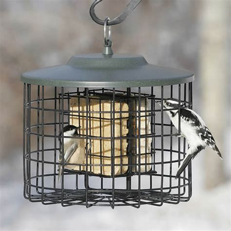 duncraft squirrel proof double suet feeder