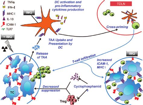 immunotherapy and radiation a new literature review the optimal partnership of radiation