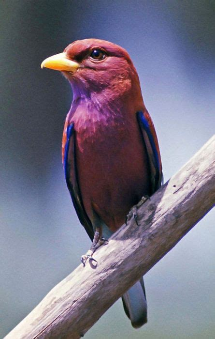 122 best images about kuşlar1 on birds bird 122 best images about birds purple pink on