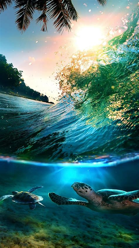 tropical sea island turtles htc  wallpaper nature