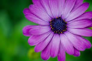 flower photography macro flower photography david mccurry photography