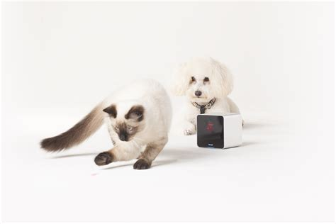 gadgets for pets 7 must have gadgets for your pet wiproo