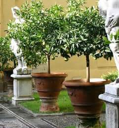 Small Trees For Patio Pots by Many Trees Shrubs And Perennials Will Grow Well In