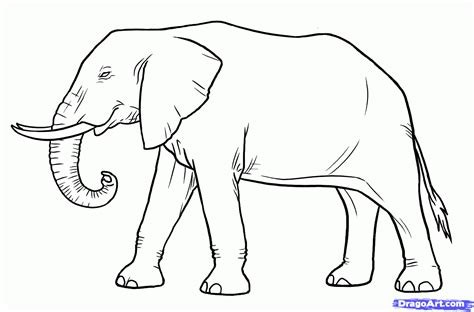 Drawing Elephant by How To Draw Elephants Step By Step Safari Animals