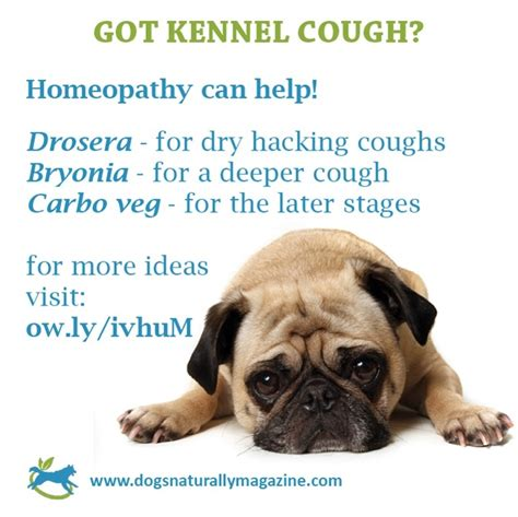 kennel cough remedies treats for and harlow