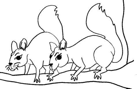 Free Printable Squirrel Coloring Pages For Kids Squirrel Coloring Pages