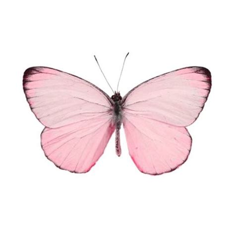 why is pink a color why isnt there a butterfly emoji nature