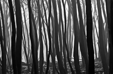 landscape pattern photography black and white landscape photography