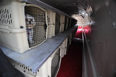 pet transportation services in connecticut limousines of connecticut