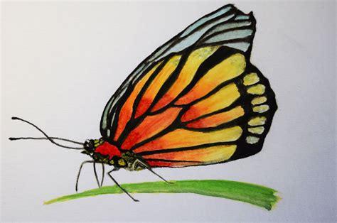 dibujos para pintar con acuarelas como pintar con acuarela paso a paso mariposa youtube