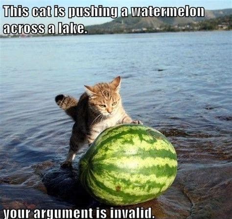 Watermelon Meme - pushing a watermelon funny cat meme