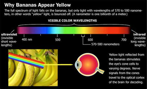 how we see color to see or not to see unariun wisdom