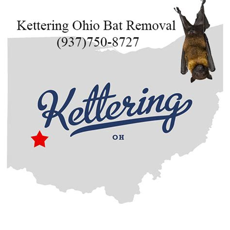 How Do You Get Rid Of Bats In Your Backyard by Get Rid Of Bats In Attic Kettering Ohio Kettering Bats