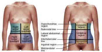 The abdomen can be ided into four quadrants or nine regions these