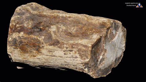 petrified wood petrified wood properties and meaning photos