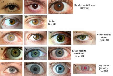 eye colors list the eye color chart hubpages