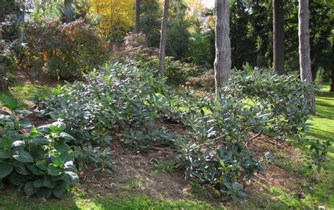 fall and winter garden brueckner rhododendron gardens more fall winter garden