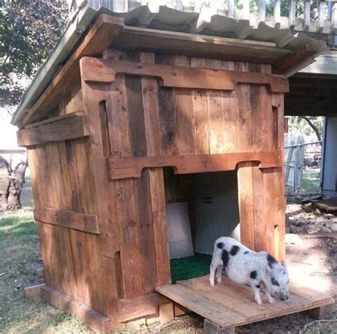 mini pot belly pig outdoor housing 86 best outdoor housing exles images on