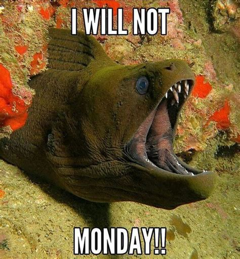 Disgusting Monday Memes - 59 monday meme pictures to try and make your weekend longer