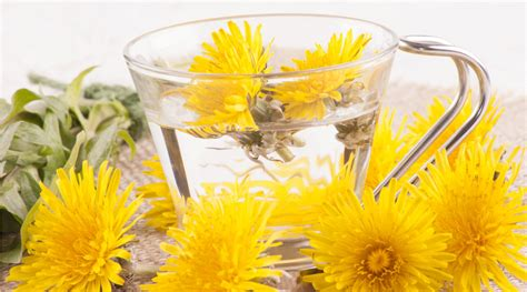 Does Dandilion Tea Detox Liver And Glaabladder by Relieve It With A Herb Dandelion Root For Liver Detox Z