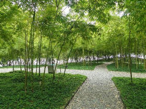 imagenes zonas verdes zonas verdes picture of bare foot park parque de los