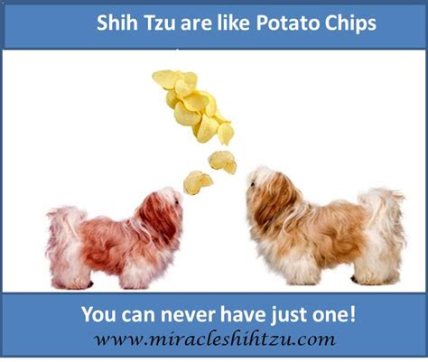 shih tzu quotes god and nature quotes