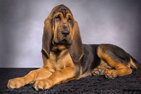 toughest breeds 21 tough to breeds show