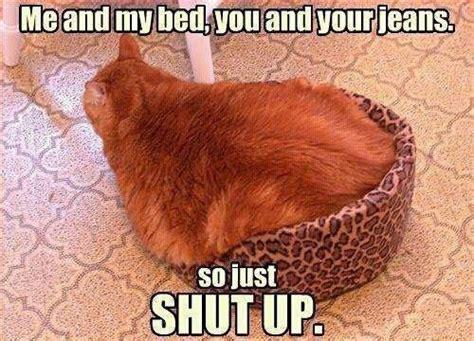 Funny Fat Cat Memes - funny fat cat in basket