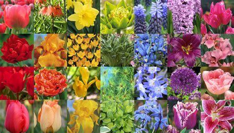 color garden color color and more color garden bulb flower
