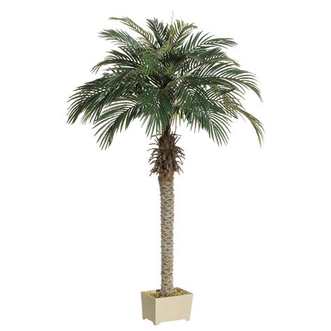 Decorative Palm Trees by 5 5 Foot Palm Tree In Decorative Pot Lpp506