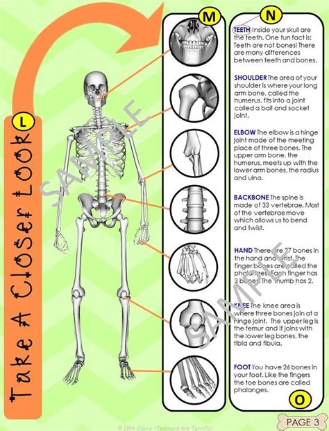biography text multiple choice the skeleton non fiction text features and task cards