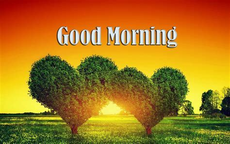 Good Morning HD Image Free   9To5Animations.Com
