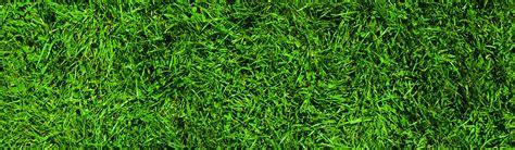 best lawn grass grass lawn