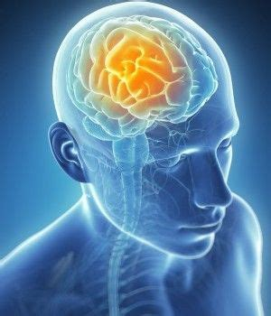Detoxing The Csf by 35 Best Craniosacral Therapy Cst Images On