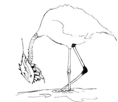coloring page horseshoe horseshoe crab coloring page az coloring pages