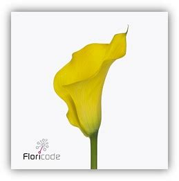 cing fiori san remo novelties fleurametz new in our range